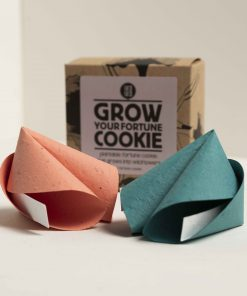 Grow your own fortune cookie box and colors